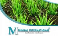 MINHAL INTERNATIONAL | 0092 345 7894023