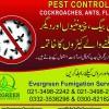 Evergreen Fumigation Service