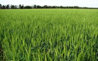Ghulam Rasool Fertilizer Company